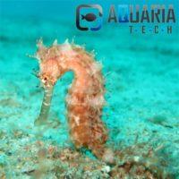 Portfolio Ingematic - Cliente Aquaria Tech - Ecommerce B2B Distribuzione migliori marchi di Acquariologia Dolce e Marina