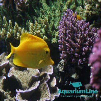 Portfolio Ingematic - Cliente Aquarium Line - Ecommerce B2C N.1 in Italia Specializzato Acquari Dolce e Marino